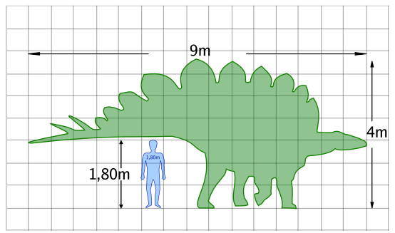 Stegosaurus_size_Piotr Jaworski_CC_3.0