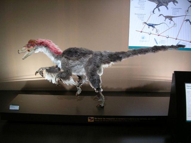Velociraptor_Noemy García García_CC_2.5_Spain